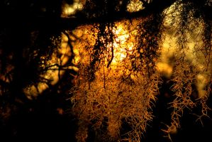 sun hiding behind the moss by allsock