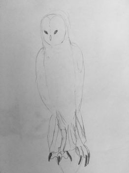 Barn Owl Sketch by TheDragonsoulofNight