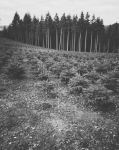 Old forest, new forest by cosmin-m
