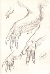 Dinosaur hand study by Paperiapina