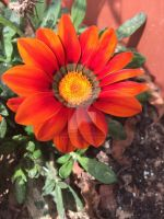 Orange flower by Aysha1994raven
