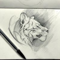 23- Tiger Sketch by Lucky978