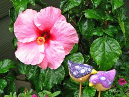 Hibiscus With Friends by JMPorter