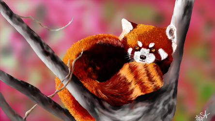 Red Panda by OkiHorse