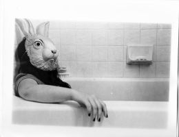 bunny in tub by tammstein