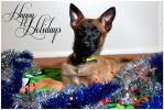 Happy Holidays 2013 by MauserGirl