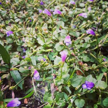 Little Violet Flowers by crystal-sand