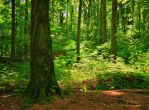 Sunlit forest by starykocur