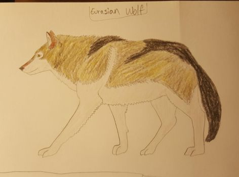Eurasian Wolf Colored by Bitten2007