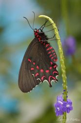 Butterfly 3 by photoboy1002001