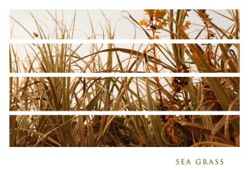 Sea Grass by coloursoftherainbow