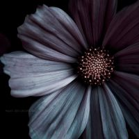 ..: Sombre poesie :.. by Mademoiselle-P