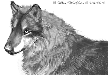 Wolf in Black and White by WindSeeker