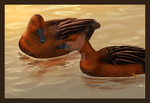 Cinnamon Teal by ShaleseSands