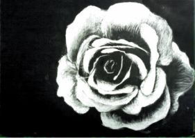 Scratchboard Rose by TheSlaveQueen
