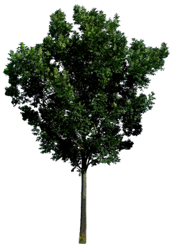 Tree 56 png HQ by gd08