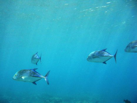 Blue Fish Group by X5-442