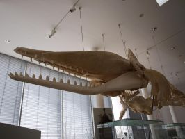 Whale Skeleton by PsykoHilly
