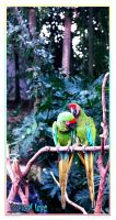 Tropical Love by picard102