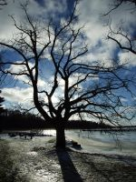 Tree1 by dreamrose-stock