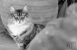 Chat / Cat par Allison Christine Martines by FROG-and-TOAD