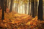 Autumn Melody by MarcoHeisler