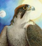 Thesis - Lanner Falcon by windfalcon