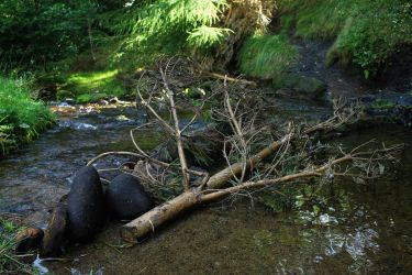 Fallen Tree Makes a Dam by todaywiththeCJB