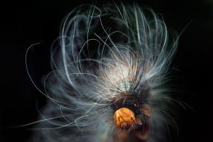Bad Hair Day by melvynyeo