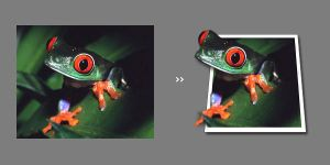 Frog Photo Effect by BeZaX