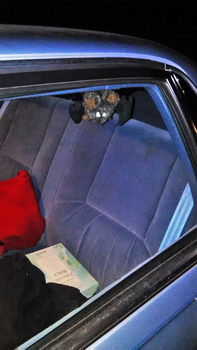 Just a Bat in My Car... by ThatTMNTchick