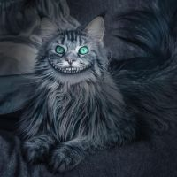 Smiling Maine Coon by Fran-photo
