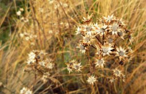Litlle golden flowers by LuthienMuse