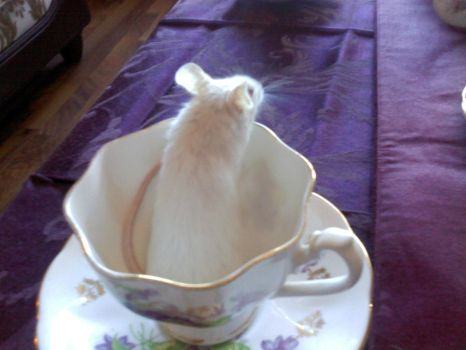 Dormouse in a Teacup by LadyVictorian