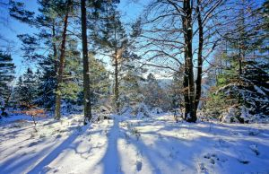 Teutoburger Wald in wintertime - Snowy Trees by zeitspuren