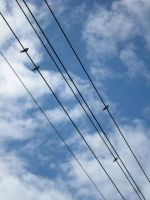 birds on the wire by feldrand