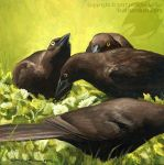 Young Grackles by Nambroth