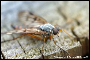 Snipe Fly Head by oliverporter3