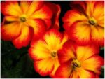 RED AND YELLOW SOMTHINGS by THOM-B-FOTO