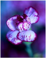 Colour of Life XII by GreenEyedHarpy