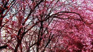 Pink tree by CocoMadamoiselle