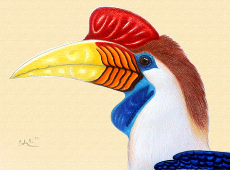 The knobbed hornbill by MalaMi95