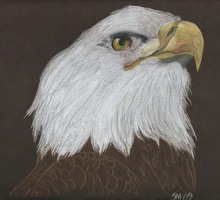 Bald Eagle in Colored Pencil by TikamiHasMoved