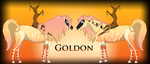 Goldon Ref by Drasayer
