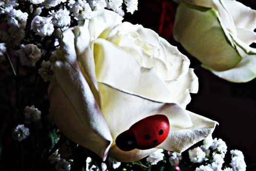 A ladybug on my white rose by holyhell-nana