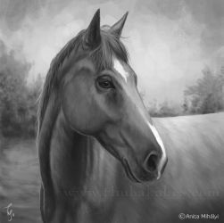 Horse Painting - Commission by Thubakabra