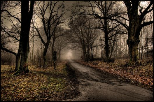 Foggy forest by Roman89