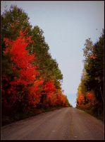 Colorful Forest Road by surrealistic-gloom