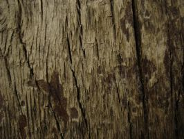 Tree texture - 10 by LunaNYXstock