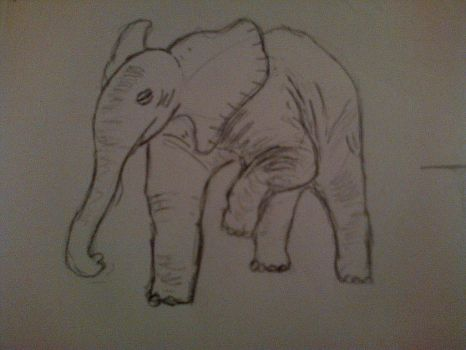 Elephant Study by Audon4150